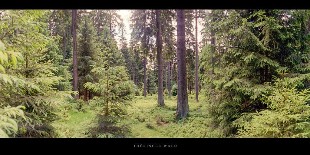 Thüringer Wald   Fichtenwald im Thüringer Wald