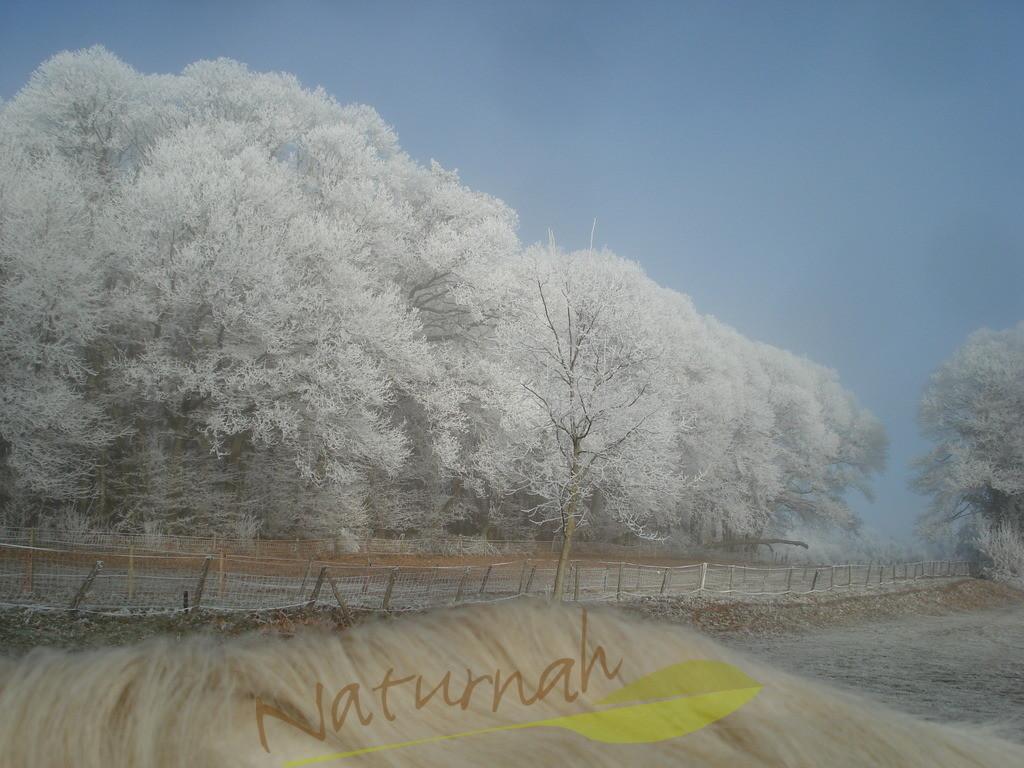 Die weiße Welle | Winterschönheiten