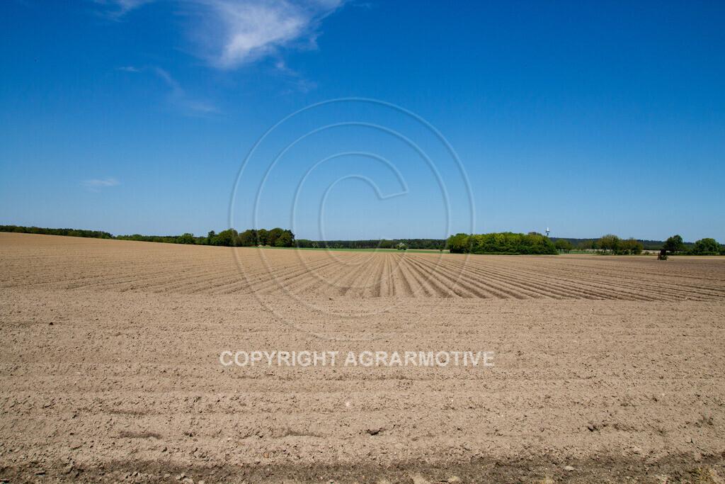 20130515-_MG_6662 | Kartoffelfeld im Frühling - AGRARFOTO BILDAGENTUR