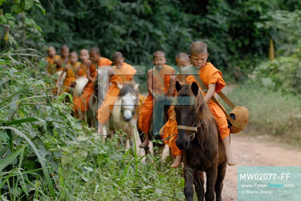 MW02077-FF | Thailand | Goldenes Dreieck | Reportage: Buddhas Ranch im Dschungel | Junge Mönche sammeln Almosen am Morgen  ** Feindaten bitte anfragen bei Mario Weigt Photography, info@asia-stories.com **