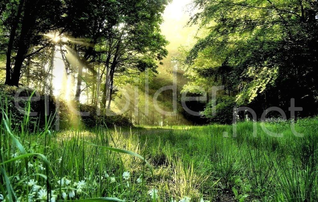 Sonnenschein | Wald, Sonne und ein Hauch von Morgennebel