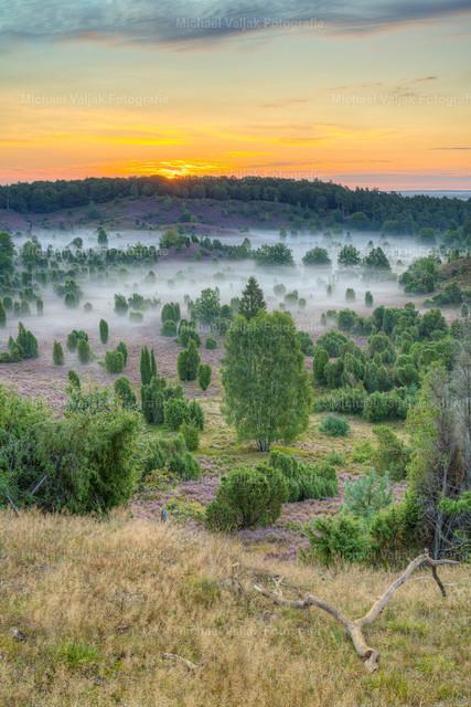 Morgenstimmung in der Lüneburger Heide | Blick in den Totengrund in der Lüneburger Heide kurz vor Sonnenaufgang. Leichter Nebel liegt über dem Boden und die Heide ist in voller Blüte.