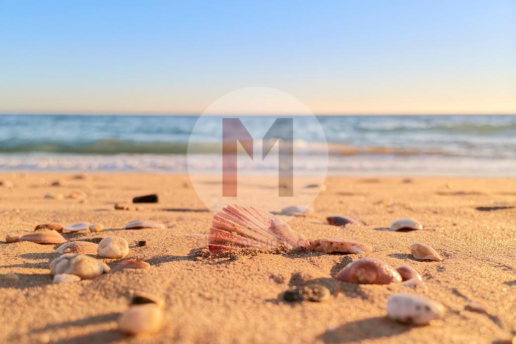 Muschel am Strand von Albufeira, Algarve, Portugal