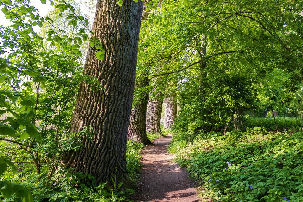 Arnis | Bäume am Wegesrand in Arnis