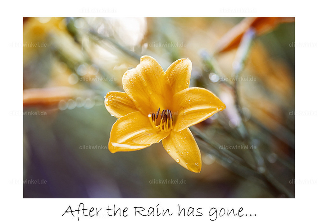 print_After-the-Rain...