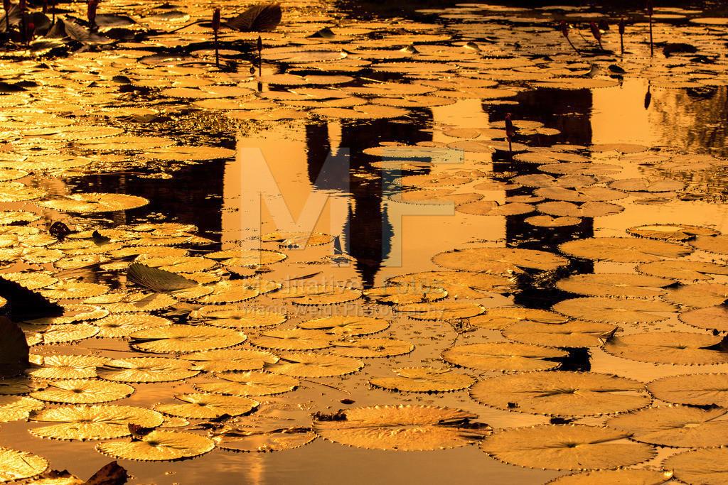MW1212-2203 | Thailand: Buddha-Statue spiegelt sich in einem Teich in Alt-Sukhothai