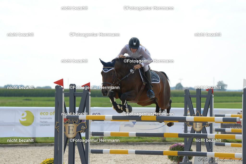 20190914-ND4_6286   Horse Gym´s Chayton, 2019, Honsolgen