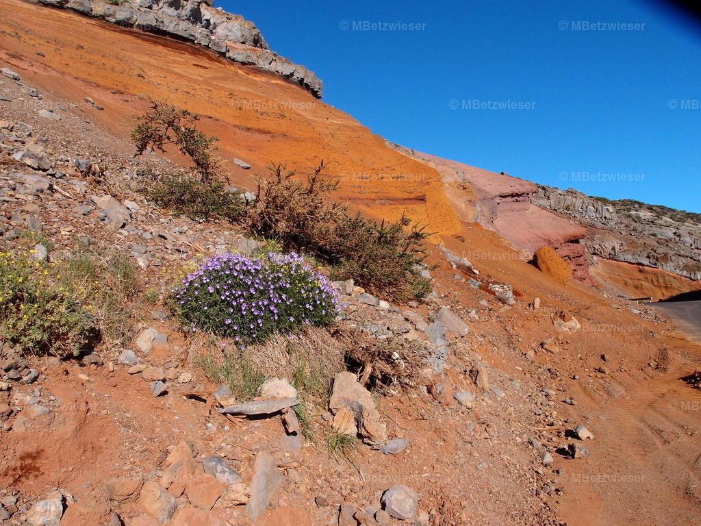 P5173760   Verschieden Lava-Sorten geben einen tollen Anblick