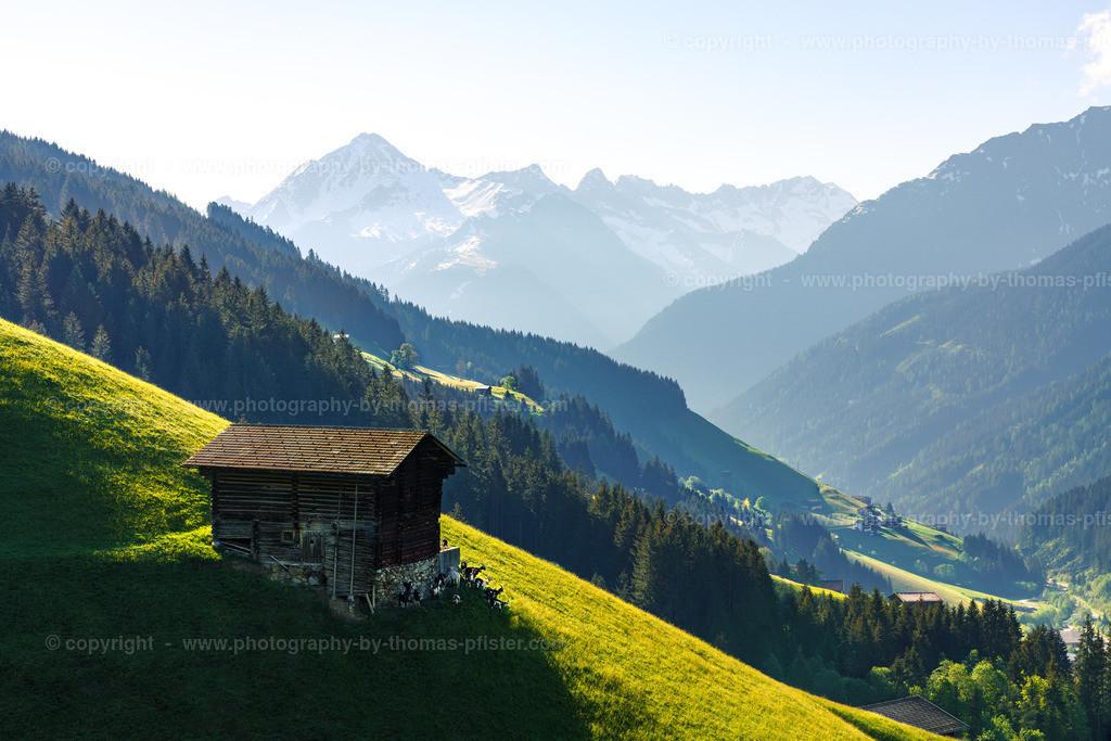 Frühling Vorderlanersbach Blick zum Ahornspitze-2