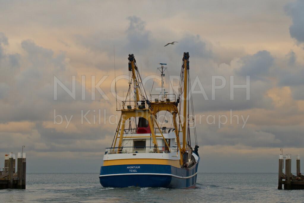 Fischerboot läuft aus | Am Sonntagabend läuft die Fischereiflotte, die im Hafen von Oudeschild liegt, aus, um in der Nordsee zu fischen. Oudeschild ist der drittgrößte Ort der Gemeinde Texel. Neben dem Fischereihafen gibt es im Hafen von Oudeschild auch eine Marina.