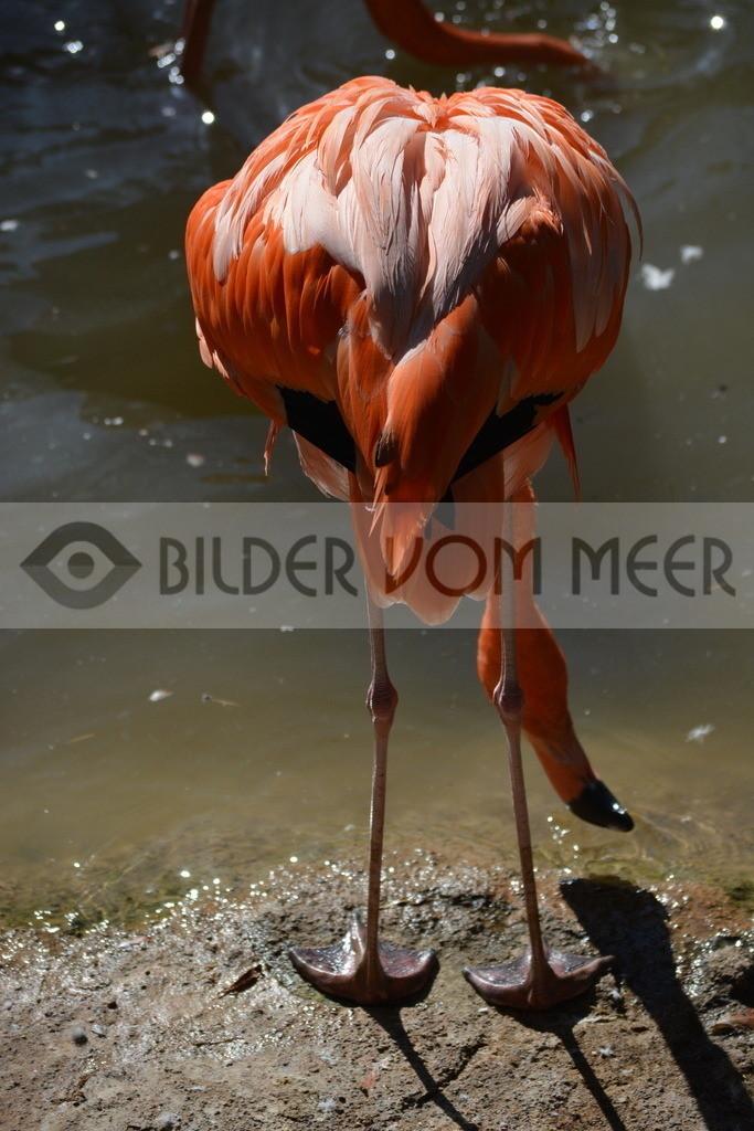 Flamingo Art Bilder   Rote Flamingo Art Bilder