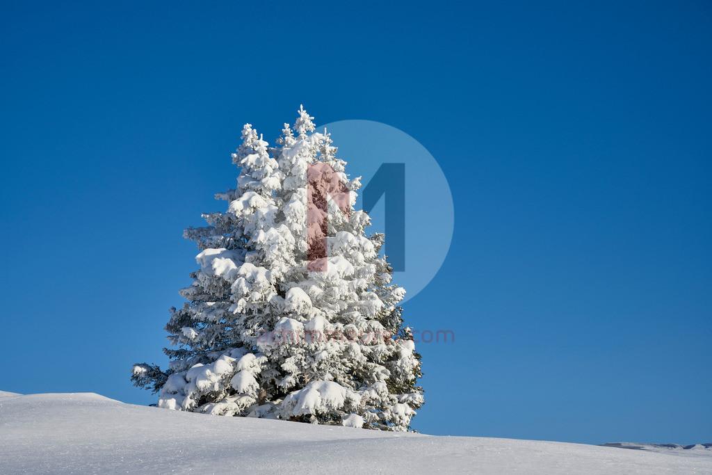 Winterlandschaft Füssener Jöchle Grän, Tannheimer Tal, Tirol, Österreich