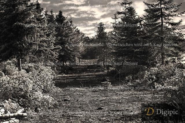 Wald 1 SW -Vorschaubild
