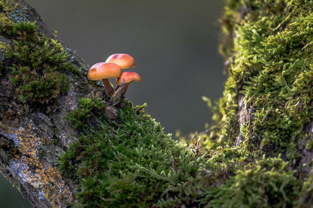 Pilze am Baum mit Moos