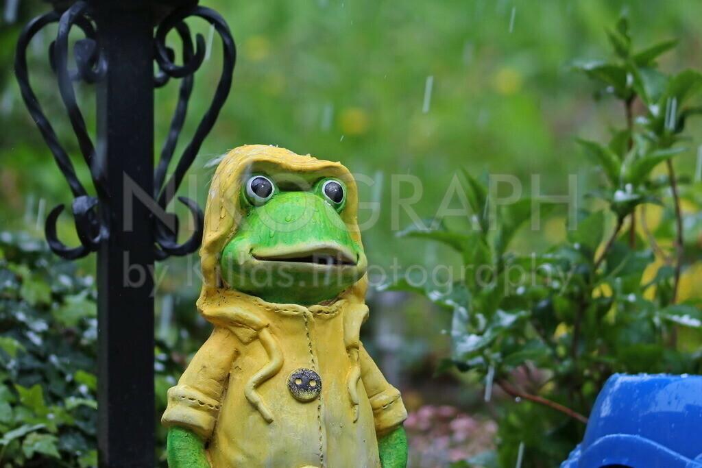 Frosch im Garten | Eine Froschskulptur im Garten während eines Regenschauers im Frühling.