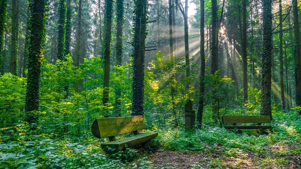 Frühlingswald auf der Haselstaude | Idyllischer Wald mit Sitzbänken auf der Haselstaude bei Kippenheim