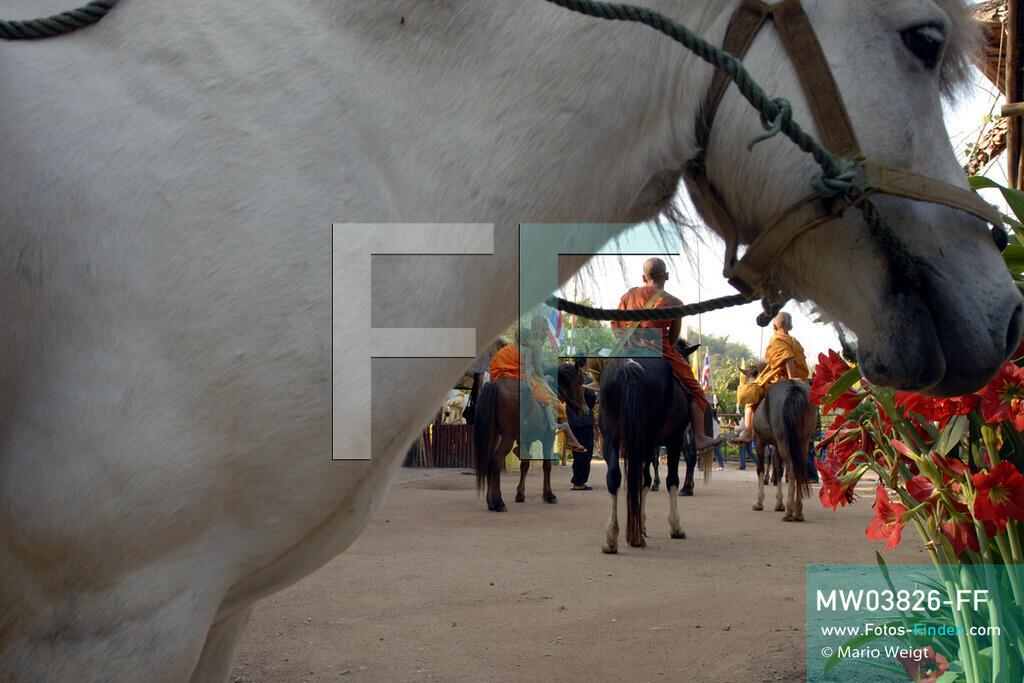 MW03826-FF   Thailand   Goldenes Dreieck   Reportage: Buddhas Ranch im Dschungel   Die jungen Mönche auf ihren Pferden im Kloster  ** Feindaten bitte anfragen bei Mario Weigt Photography, info@asia-stories.com **