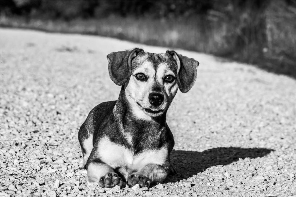 dogs--elmar.pics_02285