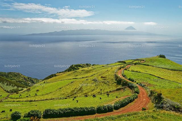 Azoren - Blick zum Vulkan Pico | Azoren - Blick von der Nordseite der Insel Sao Jorge zum imposanten Vulkan Pico auf der gleichnamigen benachbarten Insel, ein roter Feldweg führt den Blick durch Weideflächen mit Rinderherde - Location: Azores, Sao Jorge, Pico