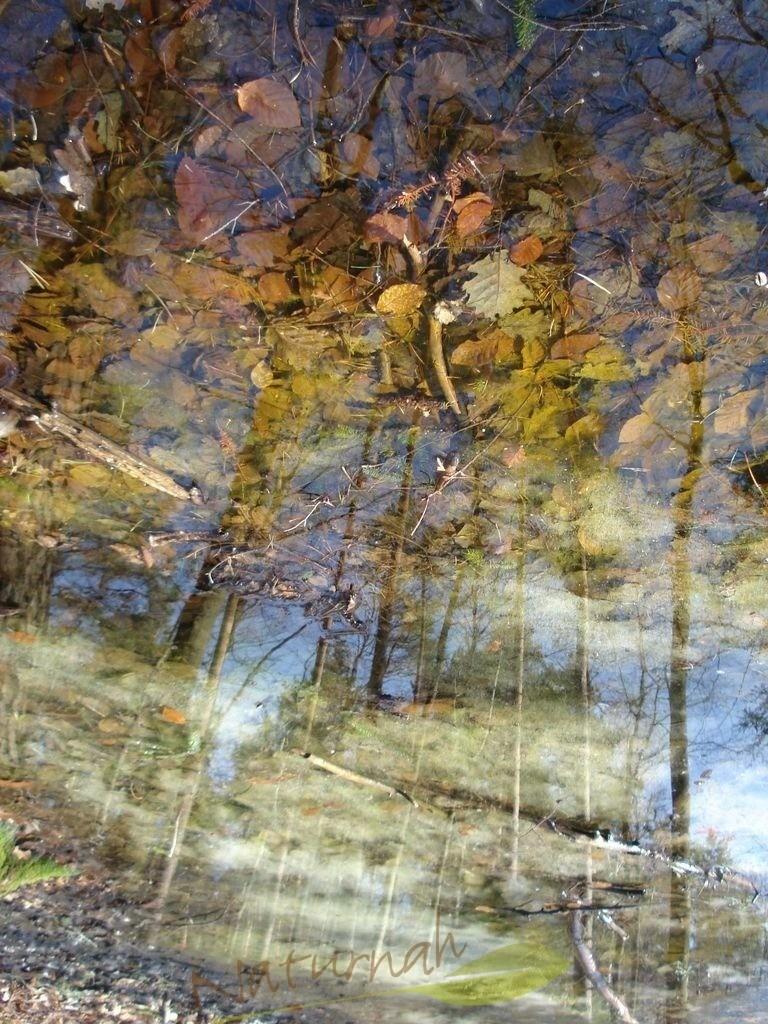 Bodenlos | Der Boden ist am Himmel - die Blätter sind wie bunte Wolken und die Bäume sind frei.