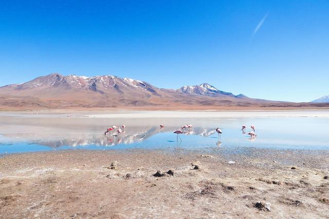 Happy Flamingo   Flamingos in der Laguna Hedionda auf der Lagunenroute im Altiplano Boliviens