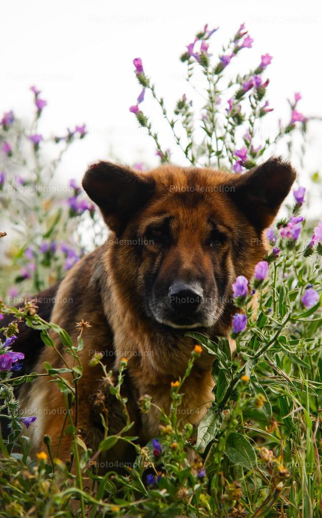 Strassenhunde-1-4