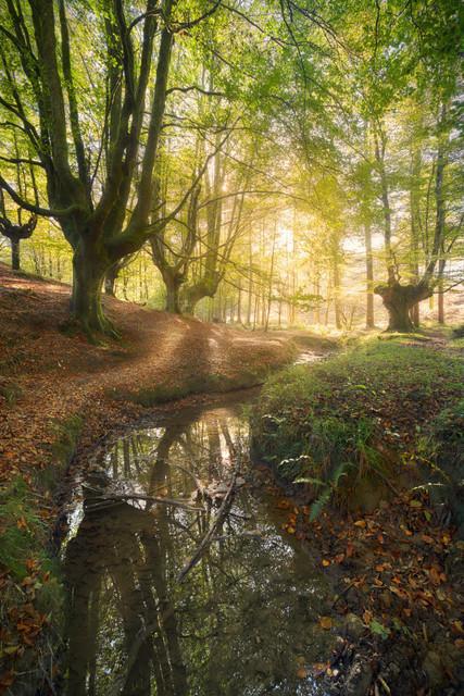 Bachlauf im Herbstwald | Ein kleiner Bach windet sich durch den baskischen Buchenwald zum Licht. Der Herbst färbt die Landschaft bunt.