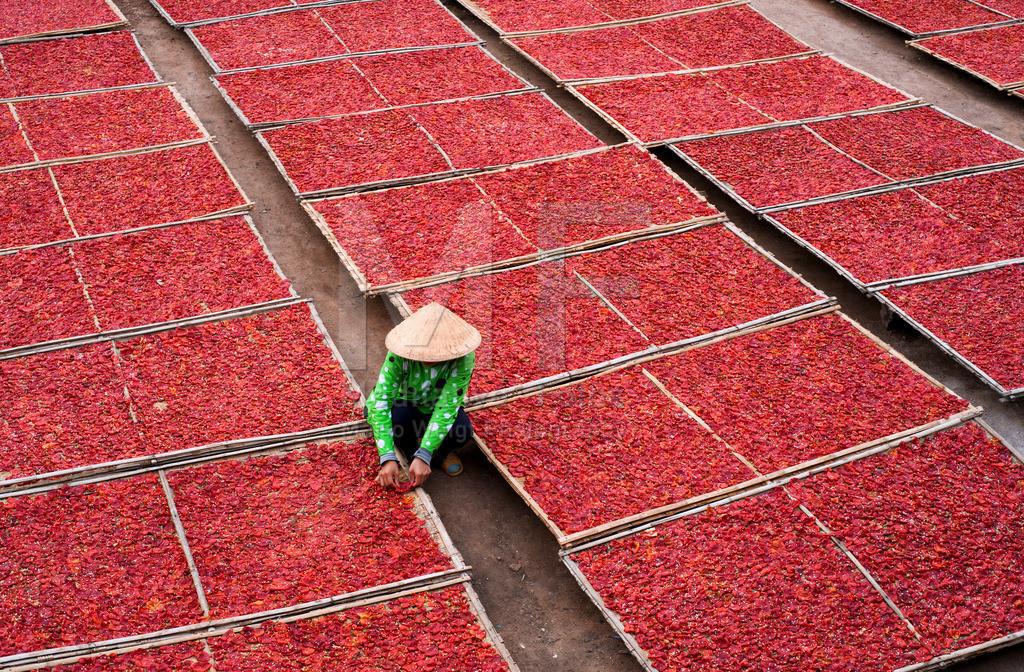 Paprika | Luft- und sonnengetrockneter Paprika auf Bambusgestellen