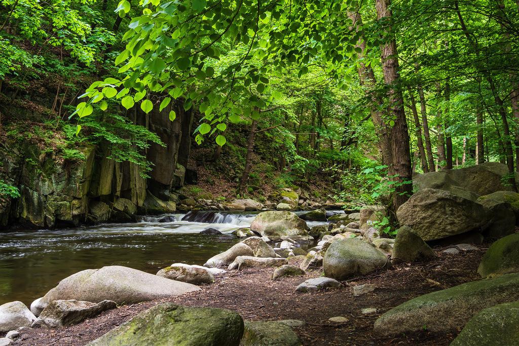 Landschaft im Bodetal im Harz | Landschaft im Bodetal im Harz.