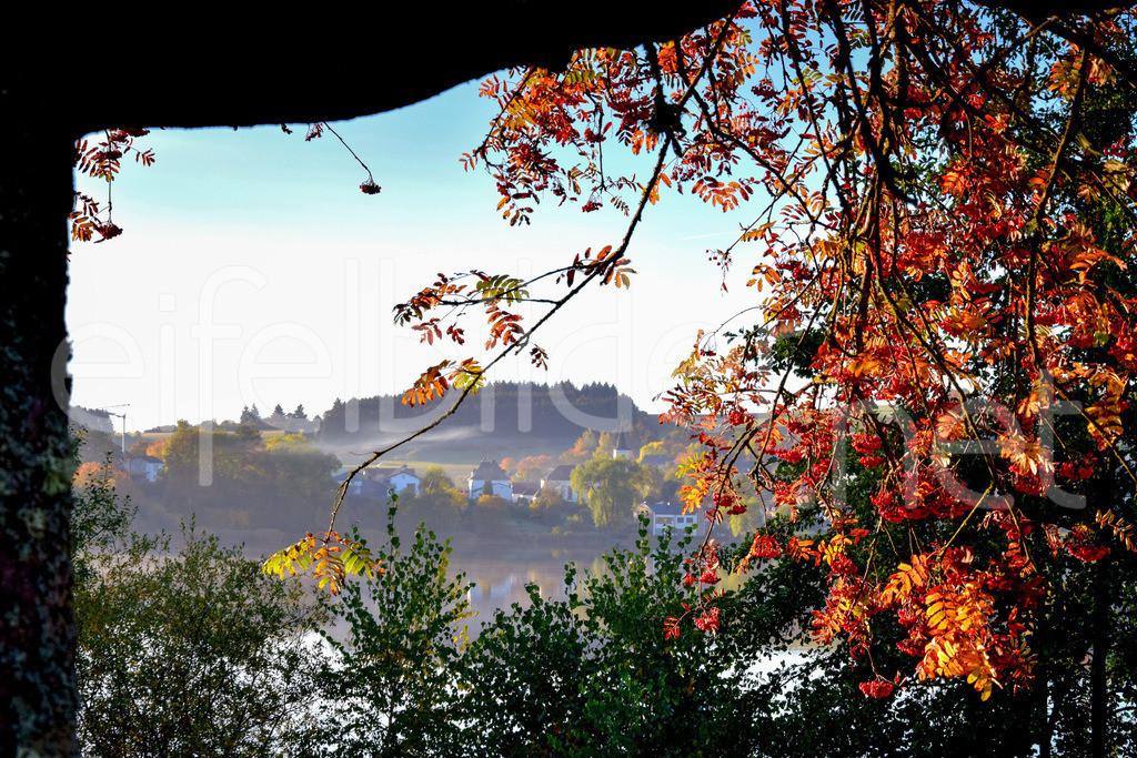 Bunter Herbst in Schalkenmehren | Daun Schalkenmehren, Eifel (Vulkaneifel)