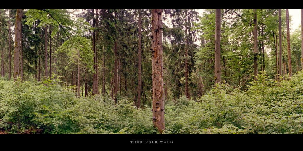 Thüringer Wald   Mischwald mit Fichten im Thüringer Wald