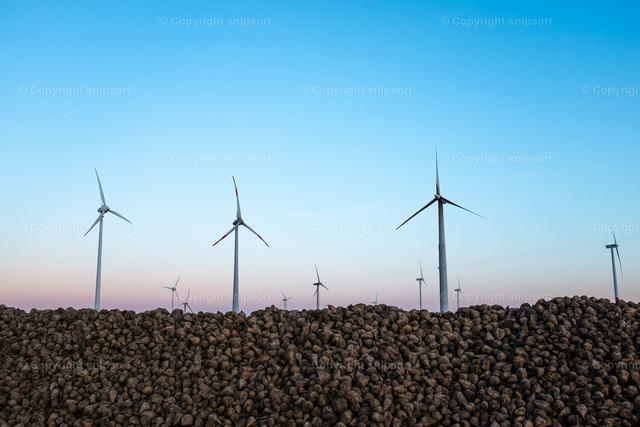 Zuckerrüben mit Windkraftanlagen im Hintergrund | Windkraftanlagen in untergehender Sonne mit einem aufgeschütteten Haufen Zuckerrüben im Vordergrund.