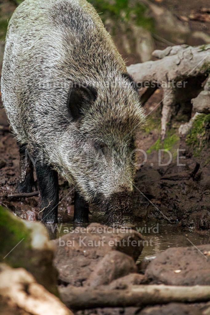Wildpark-Kaiserslautern_20210918_0768