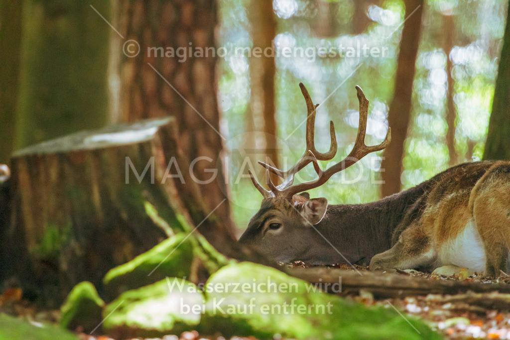 Wildpark-Kaiserslautern_20210918_0845
