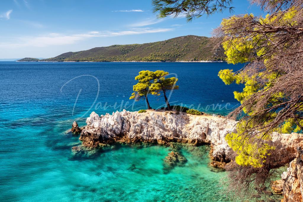 Three Pines | Die drei Bäume in einer Bucht von Skopelos