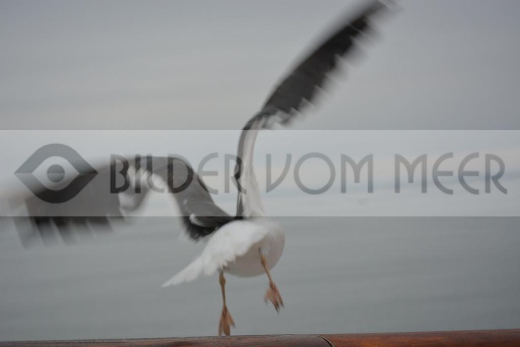 Möwen Bilder  | Abflug der Möwe