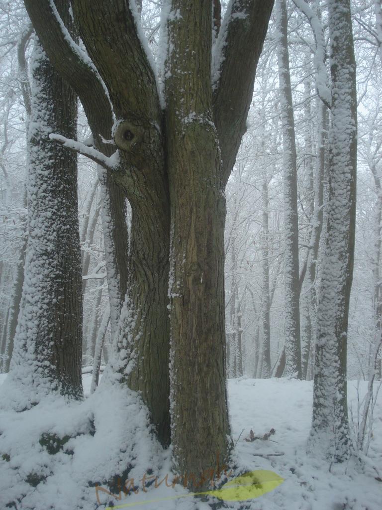Kuschelzeit im Wald