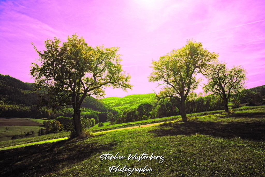 Fuchshof bei Falkenstein | Psychedelische Farben bei einer Baumreihe beim Fuchshof Falkenstein