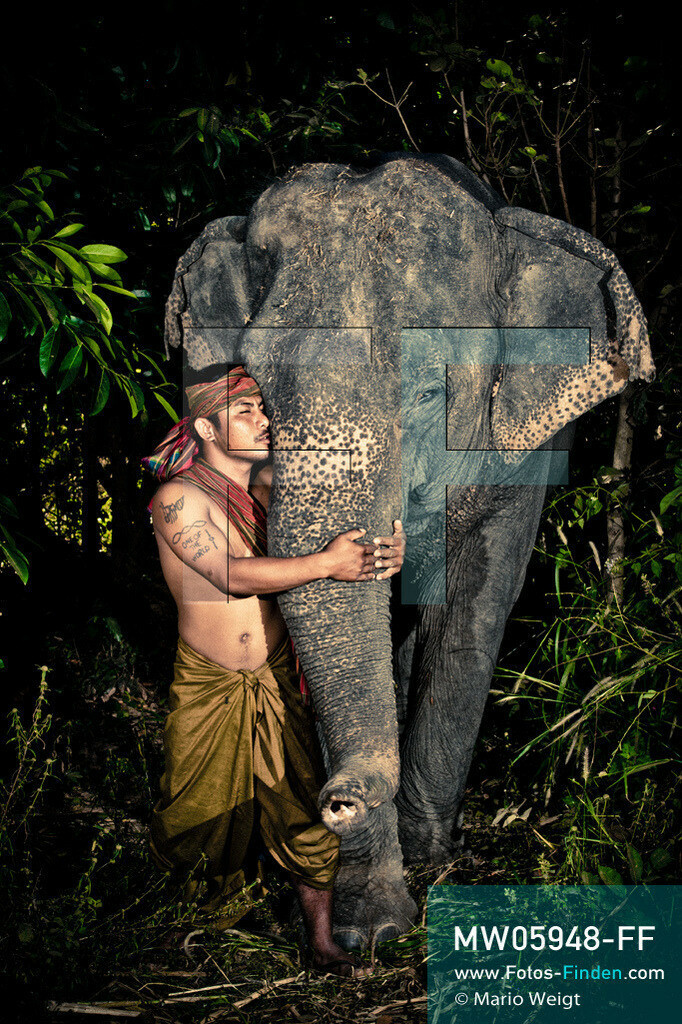MW05948-FF   Thailand   Goldenes Dreieck   Reportage: Mahut und Elefant - Ein Bündnis fürs Leben   Mahut Ket und sein Elefant Sithong im Dorf Ban Ta Klang nahe Surin. Ket gehört zur ethnischen Gruppe der Kui.  ** Feindaten bitte anfragen bei Mario Weigt Photography, info@asia-stories.com **