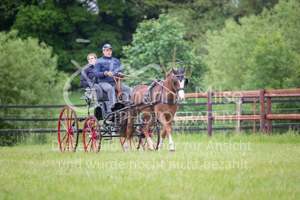 190525_Fahren-018 | Pferdesporttage Herford 2019 Fahren