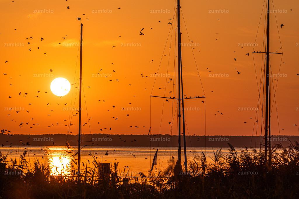 190820_0610-5256 | Ich wünsche euch einen schönen sonnigen Tag! Morgens wenn die Sonne aufgeht, sind die Schwalben im Schwarm unterwegs.