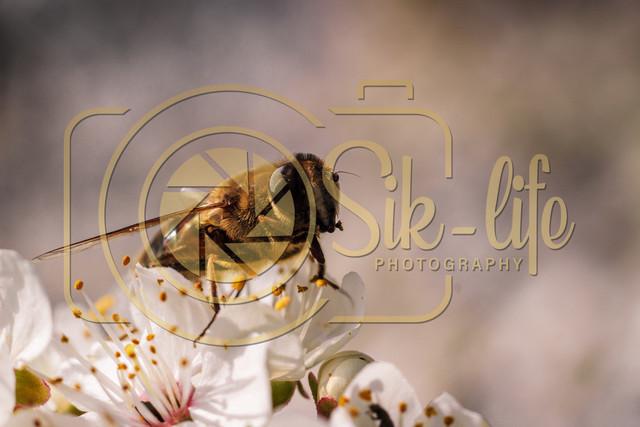 Fleißiges Bienchen 3