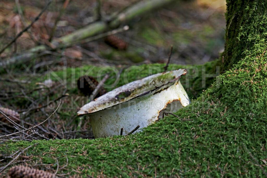 Pott-im-Wald-OS-NKI_6095