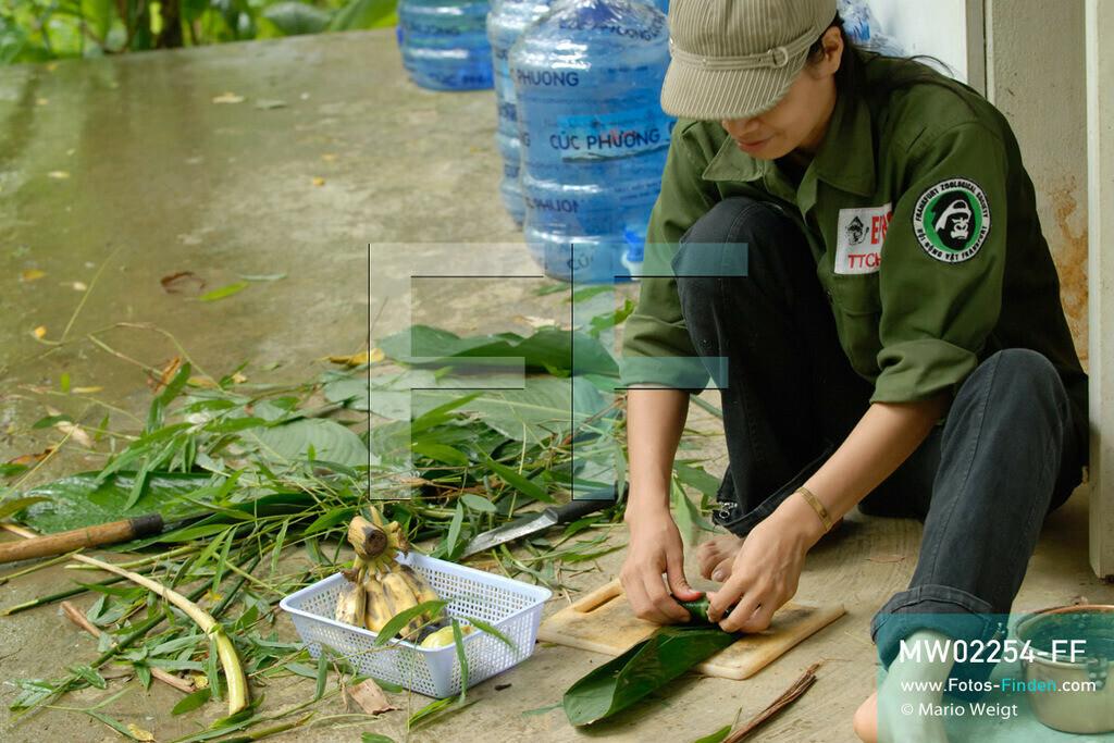 MW02254-FF | Vietnam | Provinz Ninh Binh | Reportage: Endangered Primate Rescue Center | Eine Tierplegerin bereitet Futter für Gibbons vor. Der Deutsche Tilo Nadler leitet das Rettungszentrum für gefährdete Primaten im Cuc-Phuong-Nationalpark.    ** Feindaten bitte anfragen bei Mario Weigt Photography, info@asia-stories.com **