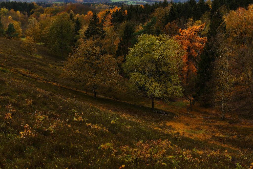 Herbst im Aukrug | herbstliches Tal im Aukrug, Schleswig-Holstein