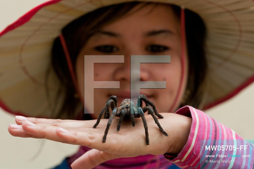 MW05705-FF | Kambodscha | Provinz Kampong Cham | Skoun | Reportage: Phektra verkauft Vogelspinnen | Verkäuferin mit lebender Vogelspinne auf ihrer Hand. Die 12-jährige Phektra lebt im Dorf Skoun, das für seine schwarzen frittierten Vogelspinnen bekannt ist. Phektra fängt und sammelt die Spinnen im Wald und verkauft die frittierten Achtbeiner an der Bushaltestelle.   ** Feindaten bitte anfragen bei Mario Weigt Photography, info@asia-stories.com **