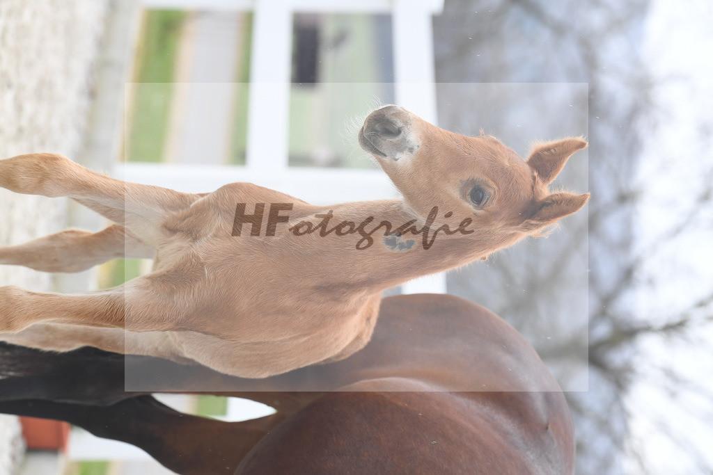 Kat-Nr. 4 HF Don Juan de Hus  6210131