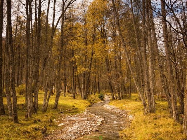 Herbstwald | herbstliche Stimmung im Val Müstair