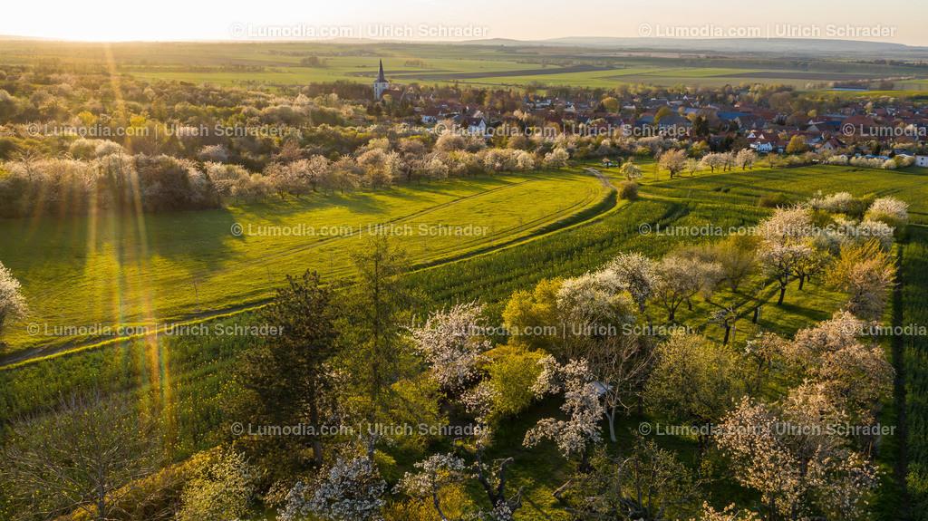 10049-51350 - Kirschblüte bei Eilenstedt