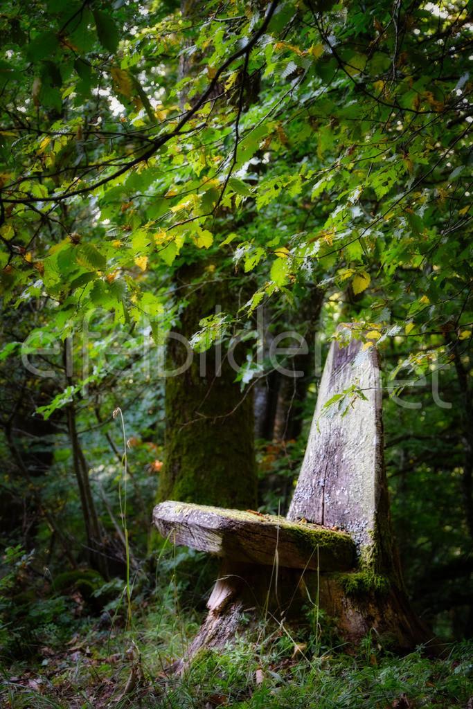 ein ruhiges Plätzchen im Wald | Ein bisschen versteht am Wegesrand, lädt dieser natürliche Baumstamm Sessel zum Verweilen und Waldbaden ein ... Fotografiert am Buerberg bei Schutz in der Vulkaneifel.